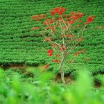 theeplantage_877_1200
